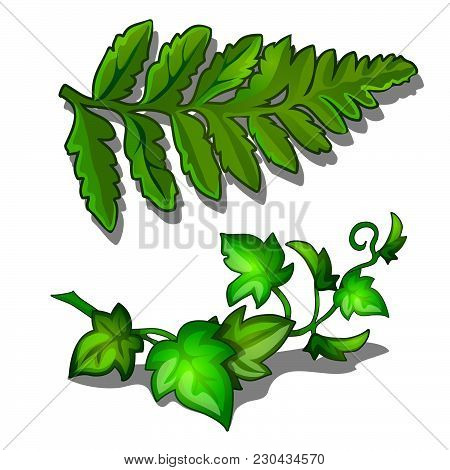 The Foliage Of Fern And Curling Of Plants Isolated On White Background. Vector Cartoon Close-up Illu