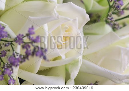 Beautiful White Roses Bouquet In Close Up View Macro Concept. Luxury Romantic Gift Or The Present On