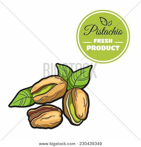 Hand Drawn Fresh Pistachio Isolated On White Background. Colorful Close-up Nuts. Vector Illustration