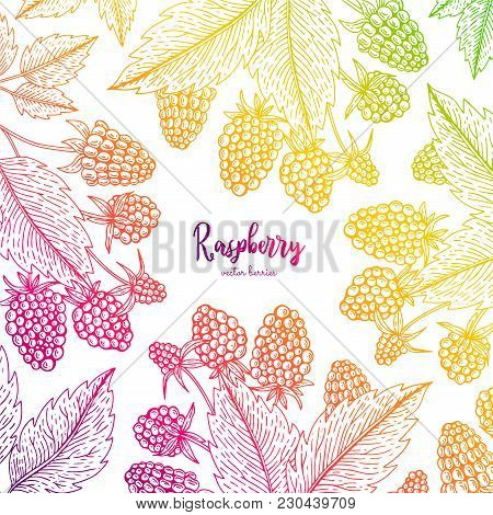 Colorful Vector Frame With Raspberry. Healthy Food Design Template With Berries. Vegetarian Food For