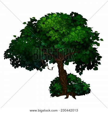 Ancient Deciduous Tree In The Park. The Vector Image.