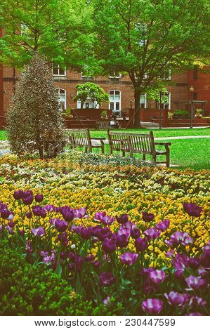 Beautiful And Bright Flowerbed Pictured On The Territory Of The George Washington University Campus