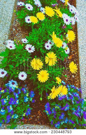 Color Flower Bed In Philadelphia City Center, Pennsylvania, Usa.