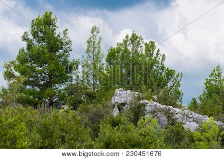 View To Big Green Trees And A Rock On A Cloudy Day, Close-up Of  Green Trees And Shrubs. Natural Veg