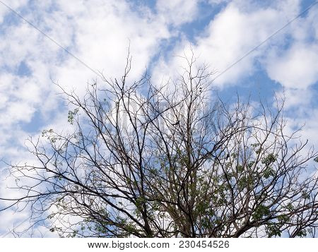 Branches Of Dry Trees Against Blue Sky With White Clouds. Fallen Leaves In Autumn Season.