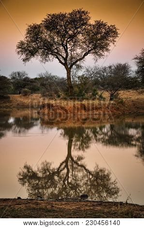 Reflection Of Tree In Still Waters Of An South African Waterhole At Sunset With Orange Sky