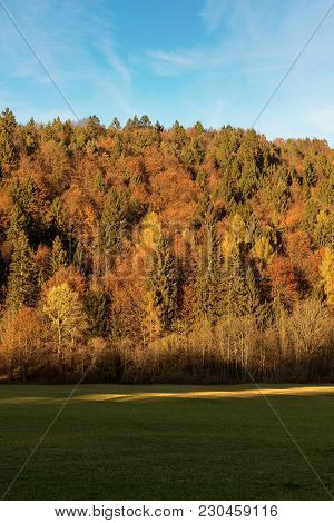 Forest In Autumn With Pines, Beeches And Firs At Sunset. Val Di Sella (sella Valley), Borgo Valsugan