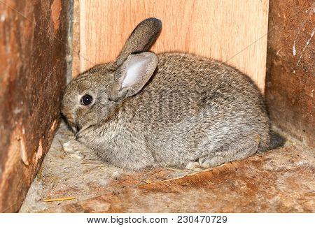 Beautiful Rabbit On The Farm . In The Park In Nature