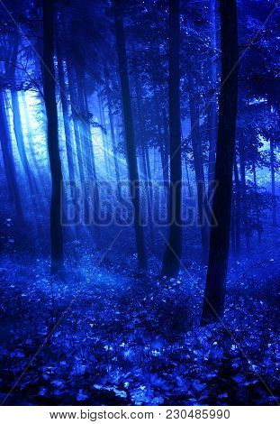 A Premade Background Of The Woods At Night Time.