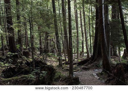 Forest Woods Green Vegetation Pine Moss Alaska