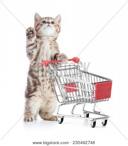 cat with shopping cart looking up isolated