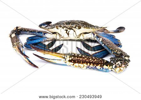 Crab Isolated, Close Up Of Raw Crustacean On White Background