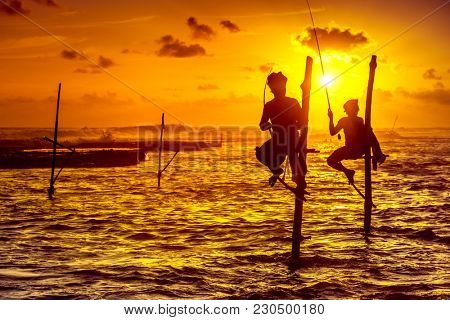 The laconic silhouettes of the fishermen sitting on their stilts waiting for swarms of fish that will pass their stilts in the shallow water. Amazing golden sunset over the Indian Ocean. Sri Lanka.
