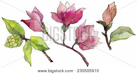 Wildflower Magnolia Flower In A Watercolor Style Isolated. Full Name Of The Plant: Magnolia. Aquarel
