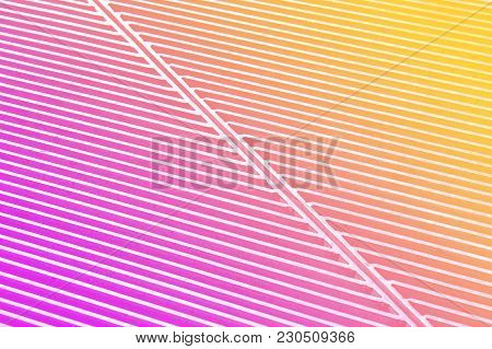 Colorful Abstract Painted Background, Pink Gradient Texture