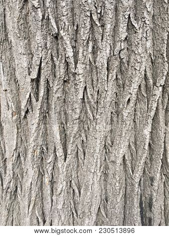 Natural Old Brown Crust Wood Texture Pattern Or Bark Wood Background For Interior Or Exterior Design