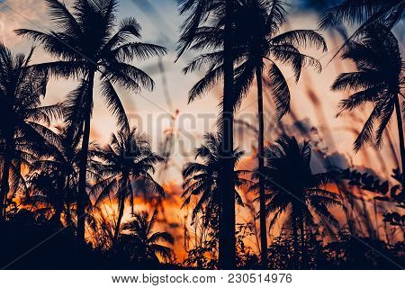 Palm Trees Silhouette At Sunset Land Scape