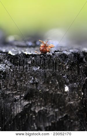 dead ant in polluted nature, macro
