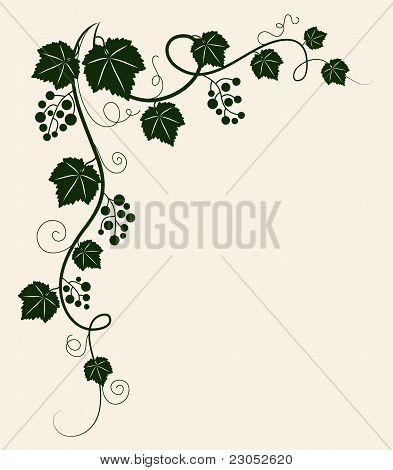 Grape vine silhouette. Vector illustration.