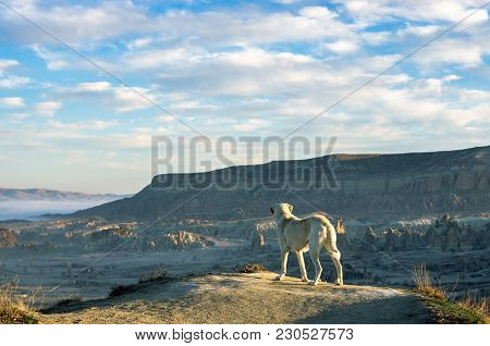 Dog Contemplating The Amazing Valley Of Cappadocia, Turkey