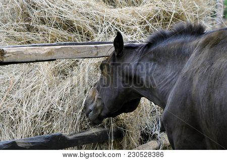 Horse Feeding Near The Haystack At The Farm