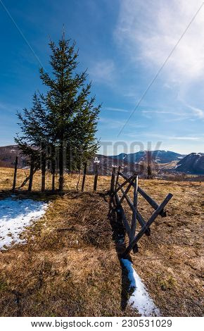 Spruce Tree Near The Fence In Mountains. Beautiful Springtime Scenery With Melting Snow On Weathered