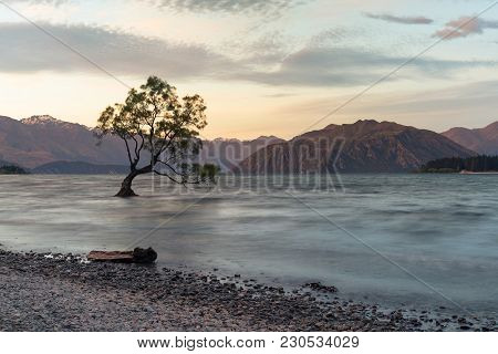 Wanaka Alone Tree On Water Lake With Mountain Background, New Zealand Natural Landscape Background