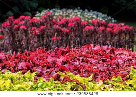 Green Leaves And Lush Red Exotic Flowers In A Rainforest. Color Background