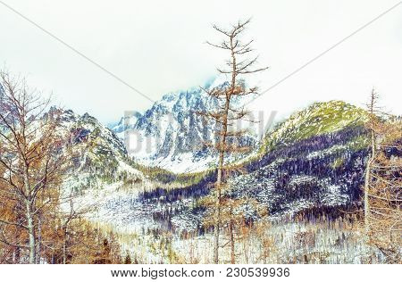 Spruce Forest After Natural Disaster In High Tatras Mountains, Slovak Republic. Winter Natural Scene