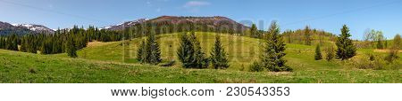 Panorama Of Mountainous Landscape In Springtime. Lovely Scenery With Spruce Forest On Grassy Slopes.