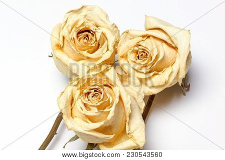 Dried White Roses. Composition Of Dried Flowers. Dried Flowers Composition.