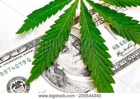 Concept Of Breaking Law In America Is Spread Of Drugs. Herbal And Marijuana On Background Of Money