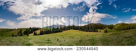 Beautiful Panorama Of Mountainous Area In Spring. Spruce Forest On Grassy Hills Of Pylypets Valley.