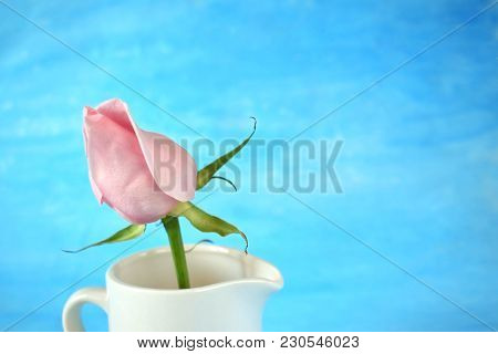 Pink Rose In A White Ceramic Jug On Blue Background. Copy Space