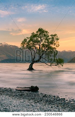 Tree On Wanaka Water Lake With Beautiful After Sunset Sky Background, New Zealand Natural Landscape