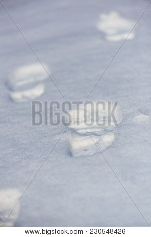 Path Of Footsteps In Fresh Snow Shallow Depth Of Field