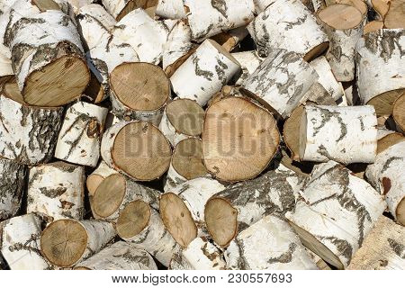 Big Pile Of Birch Logs Sawn In The Background
