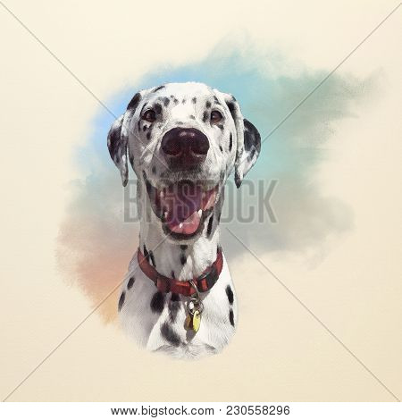Portrait Of Dalmatian Dog. The Dalmatian Is A Breed Of Medium Sized Dog. Popular Family Pet. Animal