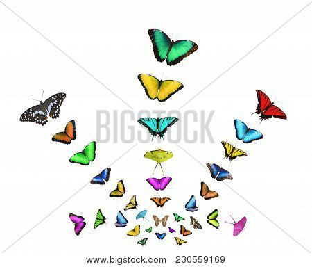 A Postcard With Colorful Butterflies Isolated On White Background. The Bright Butterflies Fly Out Fr