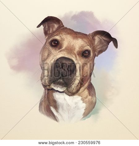 Watercolor Portrait Of American Pit Bull Terrier, A Companion And Family Dog Breed. Animal Art Colle