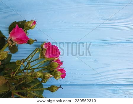 Roses On A Blue Wooden Background Copy Space, Softness, Soft, Vibrant, Natural