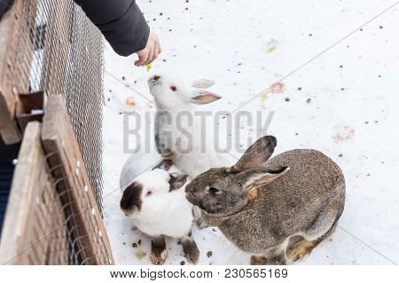 People Feed Decorative Rabbits In The Zoo.