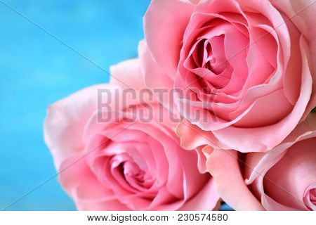 Bouquet Of Three Pink Roses On Blue Background