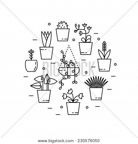 Set Of House Plant Isolated Vector Flat Illustration In Round Shape. Outline House Plants In Pots.
