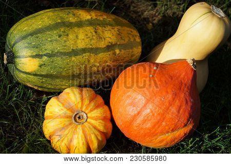 Pumpkins On A Market - Many Different Pumpkins On A Local Farmer Market Like Butternut, Hokkaido And