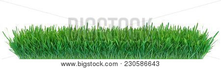 Green Grass. Natural Grass Texture Background. Meadow. Spring, Summer Season. Plant Growth 3d Render