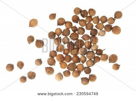Coriander Seeds Isolated On White Background Top View.