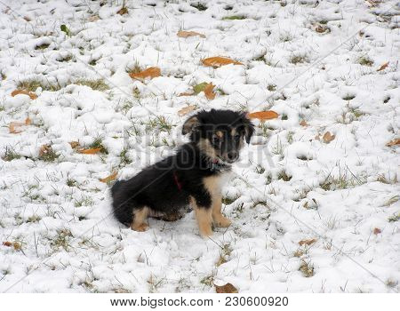Little Puppy Of A Mongrel Sits On The Snow.