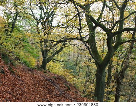 Autumn Woodland On A Steep Hill With Fallen Leaves And Forest Pathway