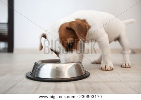 Dog eating food. Puppy is eating food from a dog bowl.